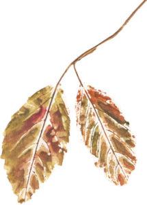 leaf-twig-2a